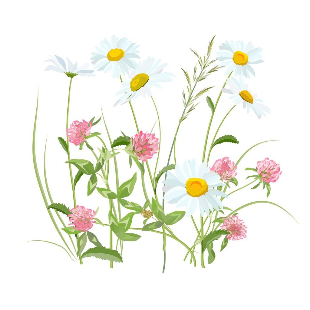 flowers-2082495_1280